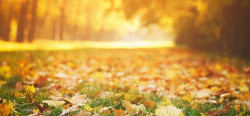 fall foliage near Chicago