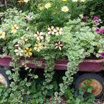 wagon with flowers in back