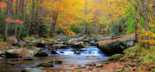 Fall foliage in a forest. Stream